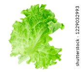 lettuce leaf isolated on white... | Shutterstock . vector #1229032993