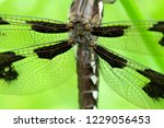 Dragonfly  Pigeon Butte Rna ...