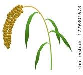 illustration of the millet   Shutterstock .eps vector #1229301673
