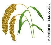 illustration of the millet   Shutterstock .eps vector #1229301679