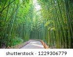 taehwa river seepri bamboo... | Shutterstock . vector #1229306779