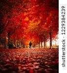 Toronto Fall Autumn Scene   Man ...