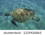 underwater turtle in the deep.... | Shutterstock . vector #1229426863