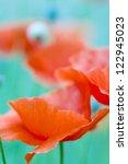 Close Up Of A Wild Poppy Flowe...