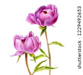 watercolor drawing pink peony... | Shutterstock . vector #1229492653