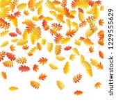 oak  maple  wild ash rowan... | Shutterstock .eps vector #1229555629