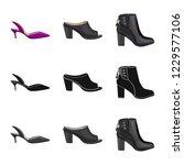 vector illustration of footwear ... | Shutterstock .eps vector #1229577106
