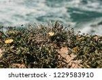 beautiful views of the atlantic ...   Shutterstock . vector #1229583910