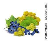fresh  nutritious  tasty grapes.... | Shutterstock .eps vector #1229598583
