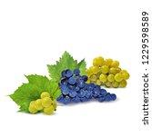 fresh  nutritious  tasty grapes.... | Shutterstock .eps vector #1229598589
