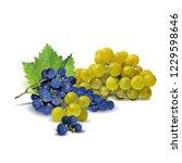 fresh  nutritious  tasty grapes.... | Shutterstock .eps vector #1229598646