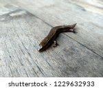 lizard on a wood background.  ... | Shutterstock . vector #1229632933