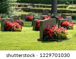 Sun Shining On Gravestones With ...