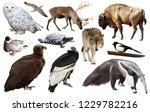 collection of different birds... | Shutterstock . vector #1229782216