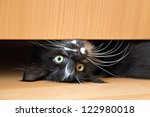 Stock photo cute black white kitten lying under a drawer of an wardrobe 122980018