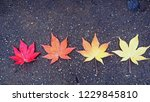 different color of maple leaf... | Shutterstock . vector #1229845810