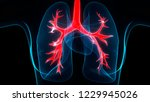 human respiratory system lungs... | Shutterstock . vector #1229945026