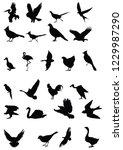 birds group silhouette  | Shutterstock .eps vector #1229987290