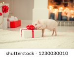 Pig In A Red Santa Claus Hat....