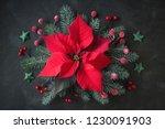Christmas Star Flower  Or...