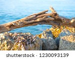 snag on the stones and sea | Shutterstock . vector #1230093139