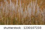 white grasses  flowers with... | Shutterstock . vector #1230107233