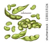 Edamame Beans And Pods Isolated ...