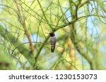 birds of arizona | Shutterstock . vector #1230153073