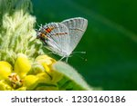 Native Bugs Plants