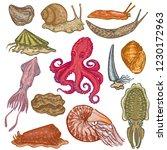 shellfish vector marine animal... | Shutterstock .eps vector #1230172963