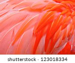 Red Bird Feather
