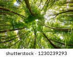 green treetops in the forest as ... | Shutterstock . vector #1230239293
