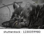 gray fluffy cat lying on the... | Shutterstock . vector #1230359980