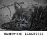gray fluffy cat lying on the... | Shutterstock . vector #1230359983