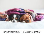 two dogs sleepeing together...   Shutterstock . vector #1230431959