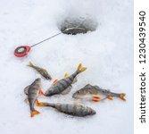 winter ice fishing concept.... | Shutterstock . vector #1230439540