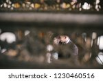 bride and groom are standing by ...   Shutterstock . vector #1230460516