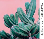 Trendy Plants On Pink Content....
