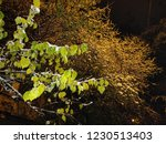 fall winter leaf snow white... | Shutterstock . vector #1230513403