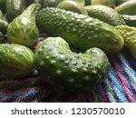 green vegetables. cucumbers.... | Shutterstock . vector #1230570010