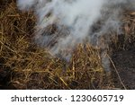 smoke  carbon dioxide from hay... | Shutterstock . vector #1230605719
