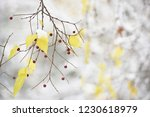 a branch with yellow leaves and ... | Shutterstock . vector #1230618979