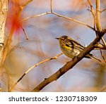 colorful songbird perched on... | Shutterstock . vector #1230718309