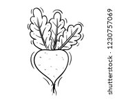 radish vegetable with doodle... | Shutterstock .eps vector #1230757069