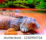 the  iguana  is a large... | Shutterstock . vector #1230904726