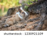 little rabbit with a leash on... | Shutterstock . vector #1230921109