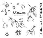 set of hand drawn sketch... | Shutterstock .eps vector #1230937720