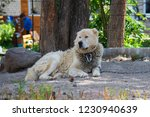 caucasian shepherd dog outdoor... | Shutterstock . vector #1230940639