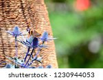 macro shooting of butterfly on... | Shutterstock . vector #1230944053