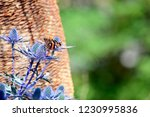 macro shooting of butterfly on... | Shutterstock . vector #1230995836